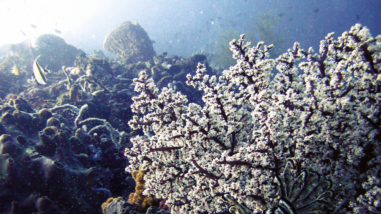 To Help Coral Survive Climate Change, Scientists Try Speeding Up Evolution