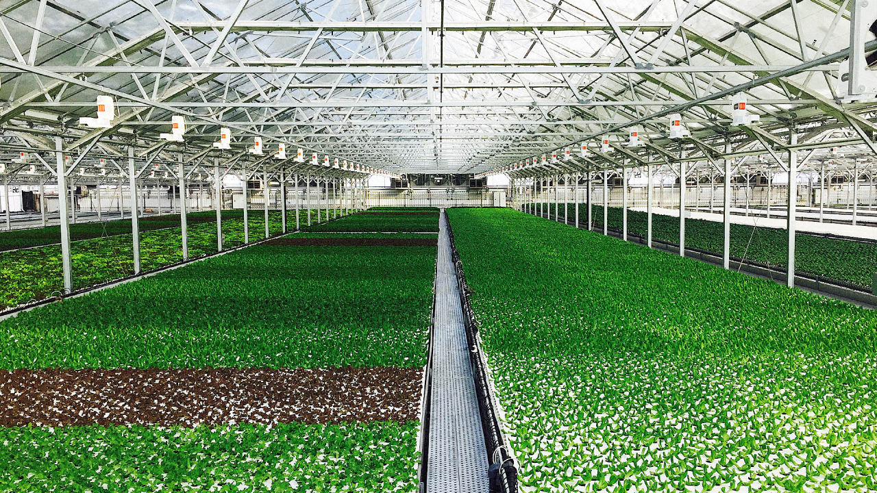 This is the world s largest rooftop greenhouse for What is a green home