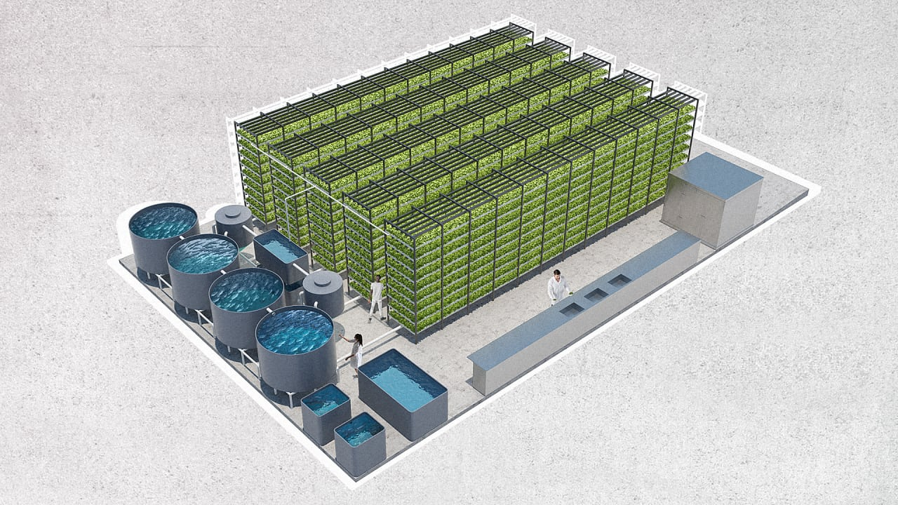 A Massive Aquaponic Lettuce And Fish Farm Will Grow In A Brooklyn Ware - Aquaponics business plan templates