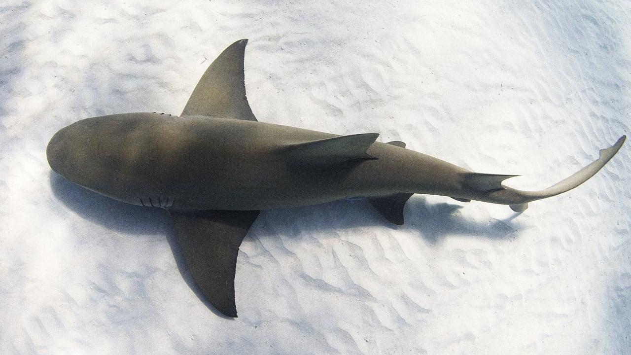 Can Shark-Spotting Drones Actually Spot Sharks?