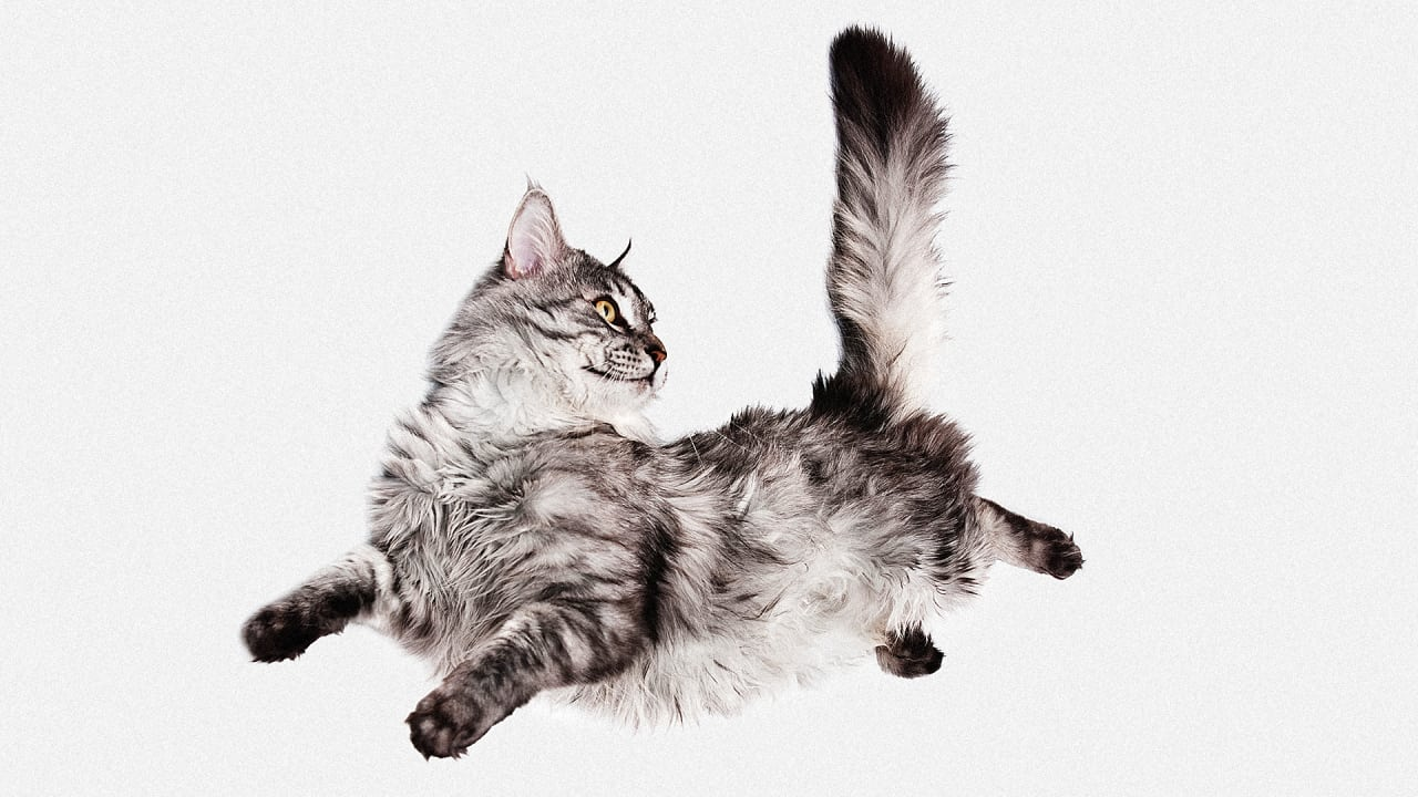 Your Cat Is A Natural Born Physicist