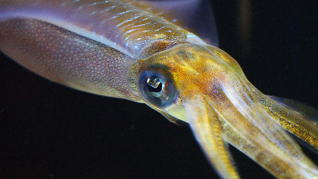 Self-Healing Clothing Made From Squid Teeth Can Repair Itself