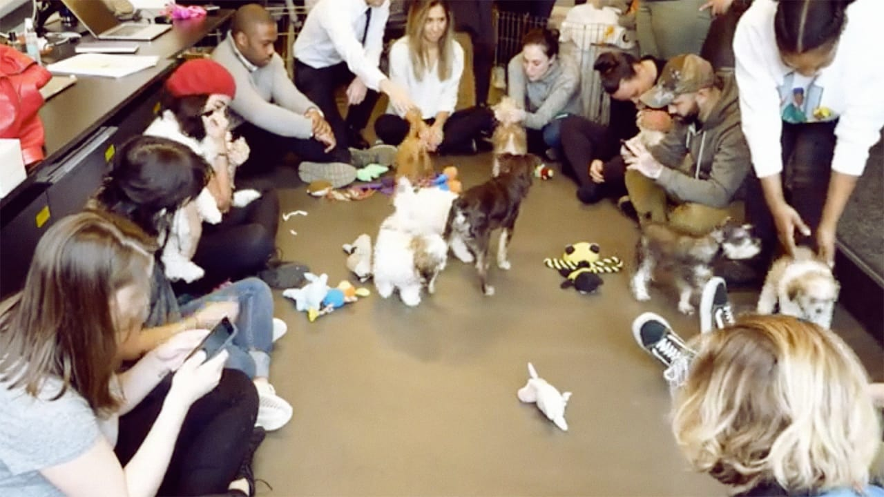 A New York Agency Is Streaming Puppies On Facebook Live Instead Of The Inauguration