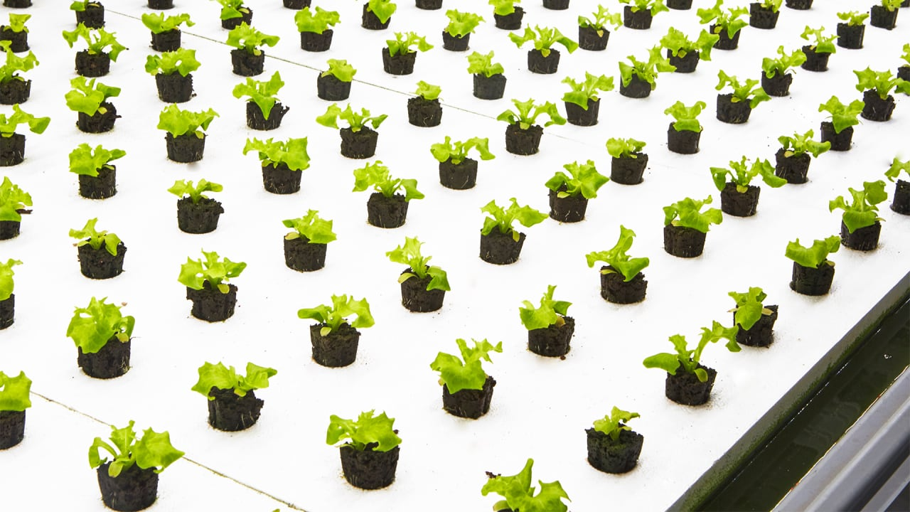 """Inside The Vertical Farm Growing What It Calls """"The World's First Post-Organic"""" Produce"""