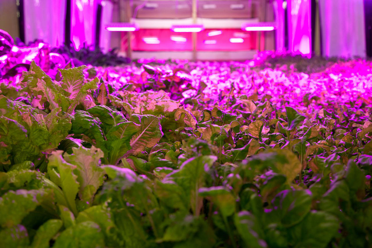 A Meatpacking Plant Transformed Into A Vertical Farm