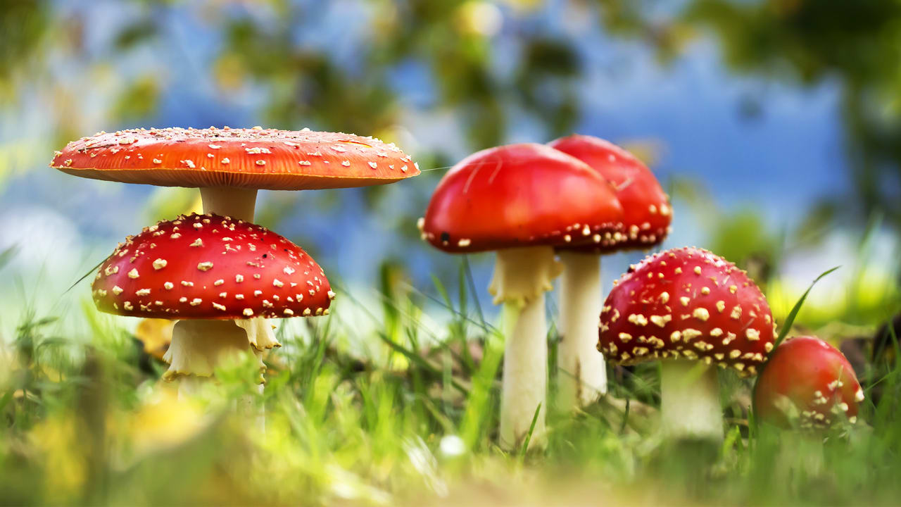 fungus is the internet of the plant world