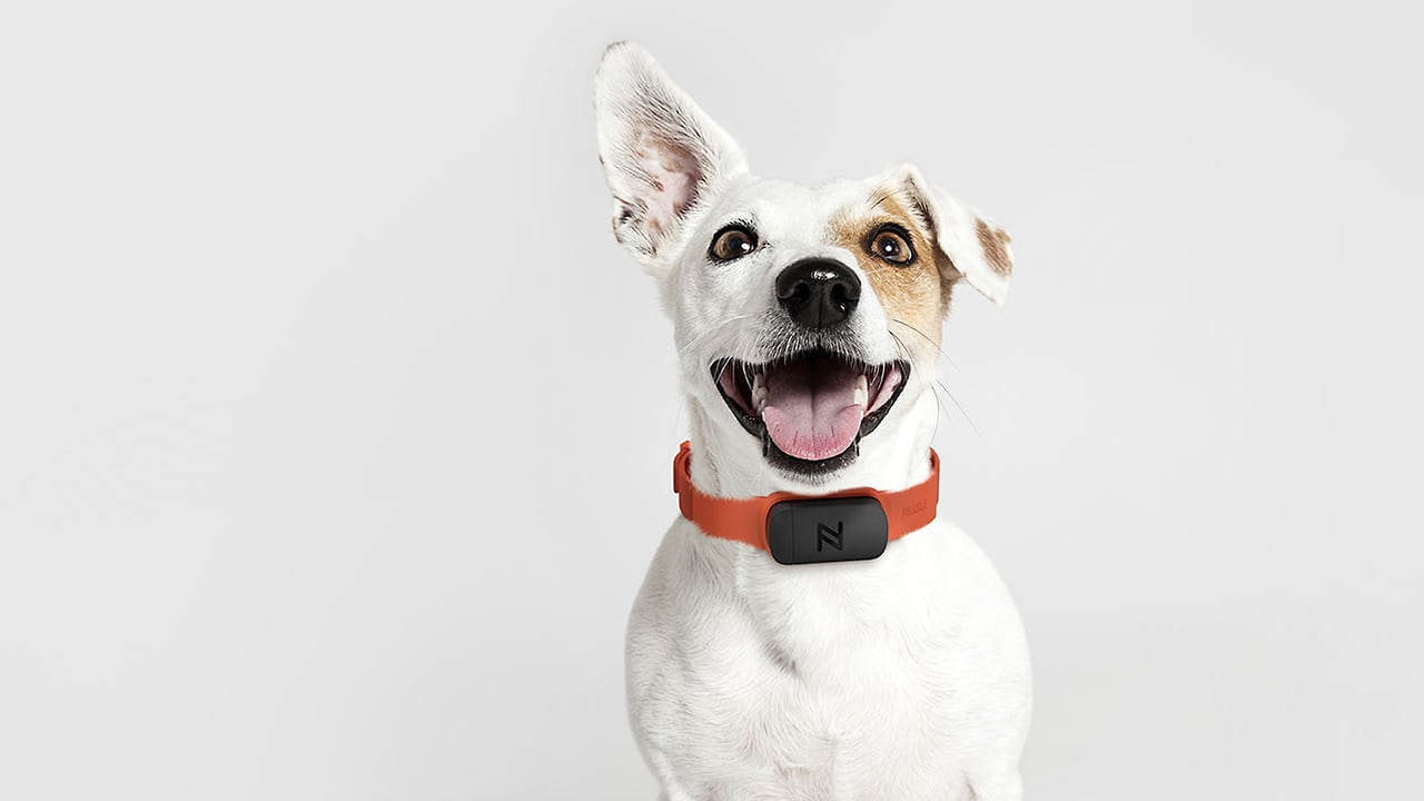 Is Nuzzle The iPod Of Pet Insurance? Ammunition Thinks So.