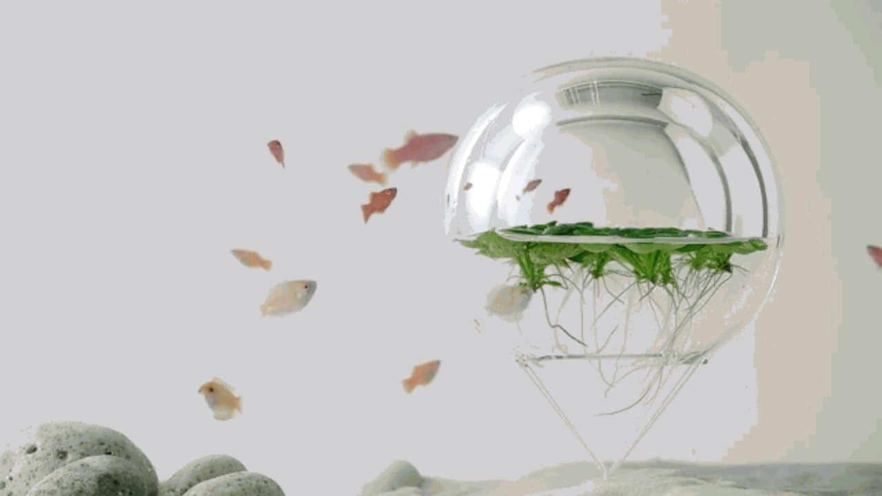 Architectural Aquariums So Gorgeous, You Won't Miss Your Dead Goldfish