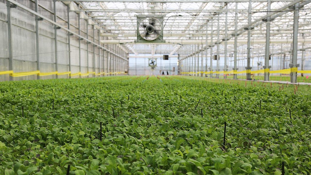 The Future Of Urban Farming Might Actually Be Suburban Farming