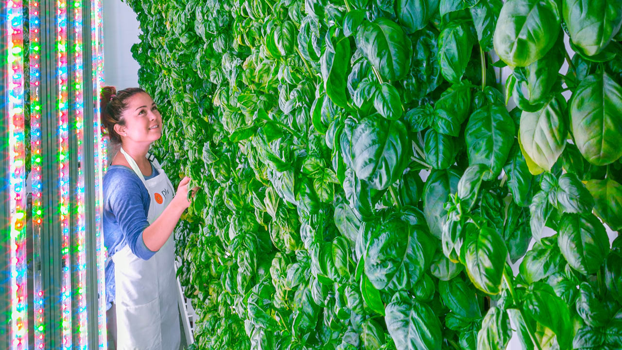 Has This Silicon Valley Startup Finally Nailed The Indoor Farming Mode