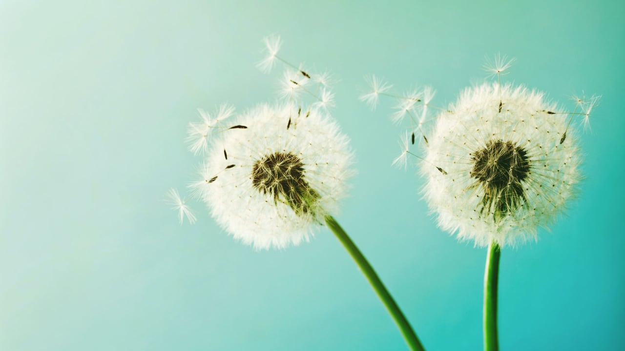 How To Stop Seasonal Allergies From Killing Your Productivity