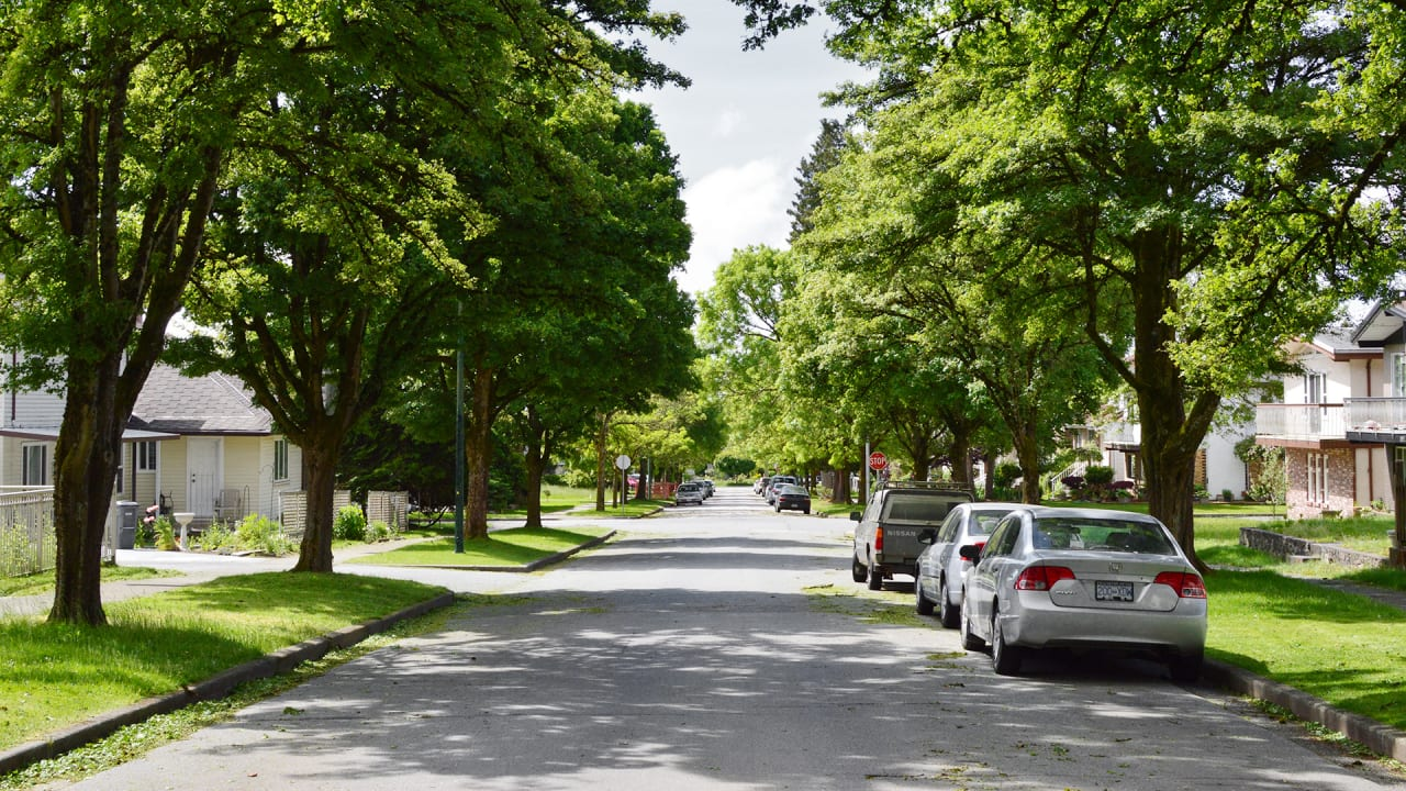 Scientists Discover Yet Another Reason Cities Need More Trees