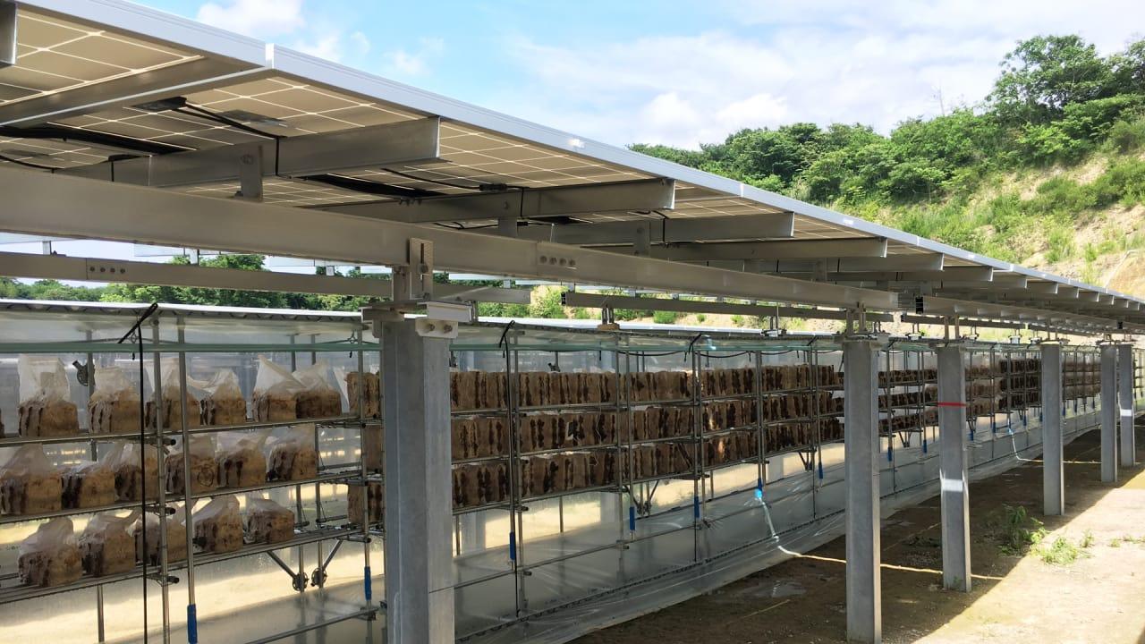 These Solar Farms Have A Secret Hiding Under Them Mushrooms