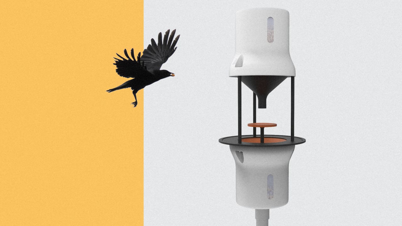 Here's A (Crazy?) Plan To Bribe Crows To Clean Up Cigarette Butts