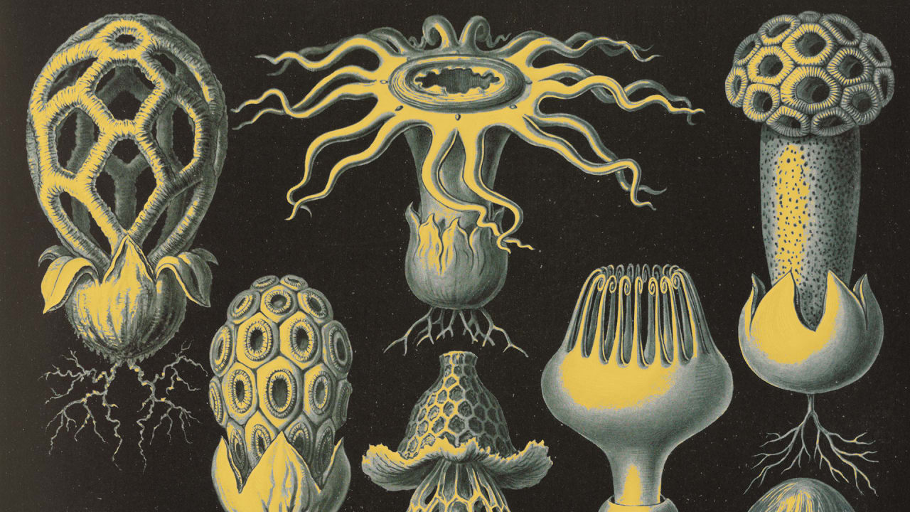 Bildung, Sprachen & Wissen Software Ernst Mycology Mushroom Fungi Fungus Training Book Course 2019 New Fashion Style Online