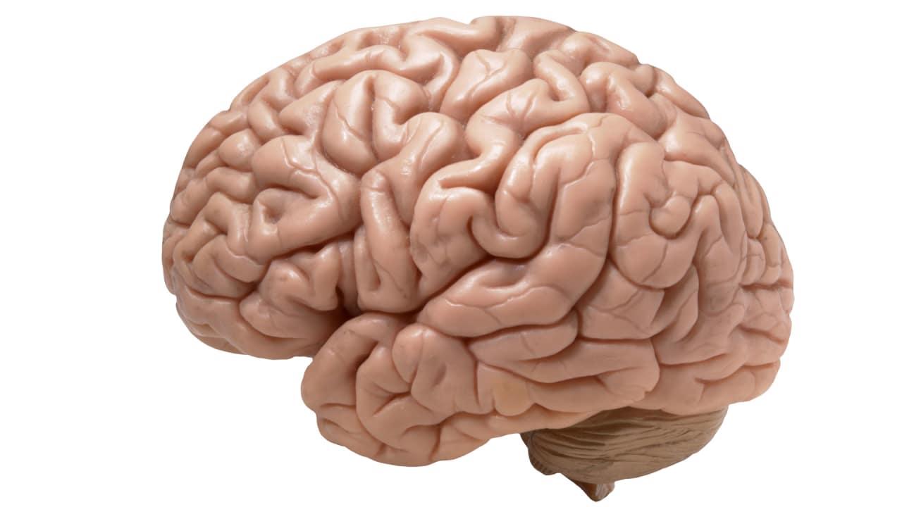 mit�s big brains will study brains to build better brains