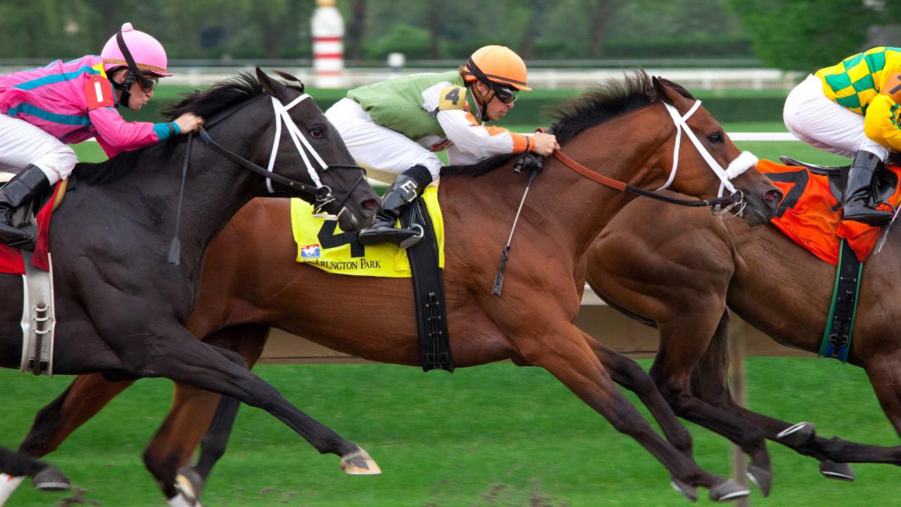 Kentucky Derby 2018 How Do Racehorses Get Their Odd Names
