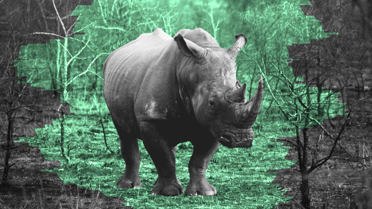 Endangered rhinos are now being protected by powerful data analytics