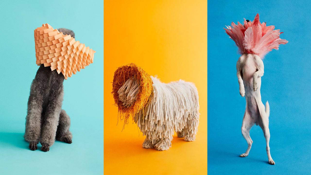 See 11 dogs rocking fabulous cones of shame