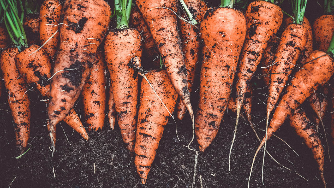 Everything you need to know about the booming business of fighting food waste