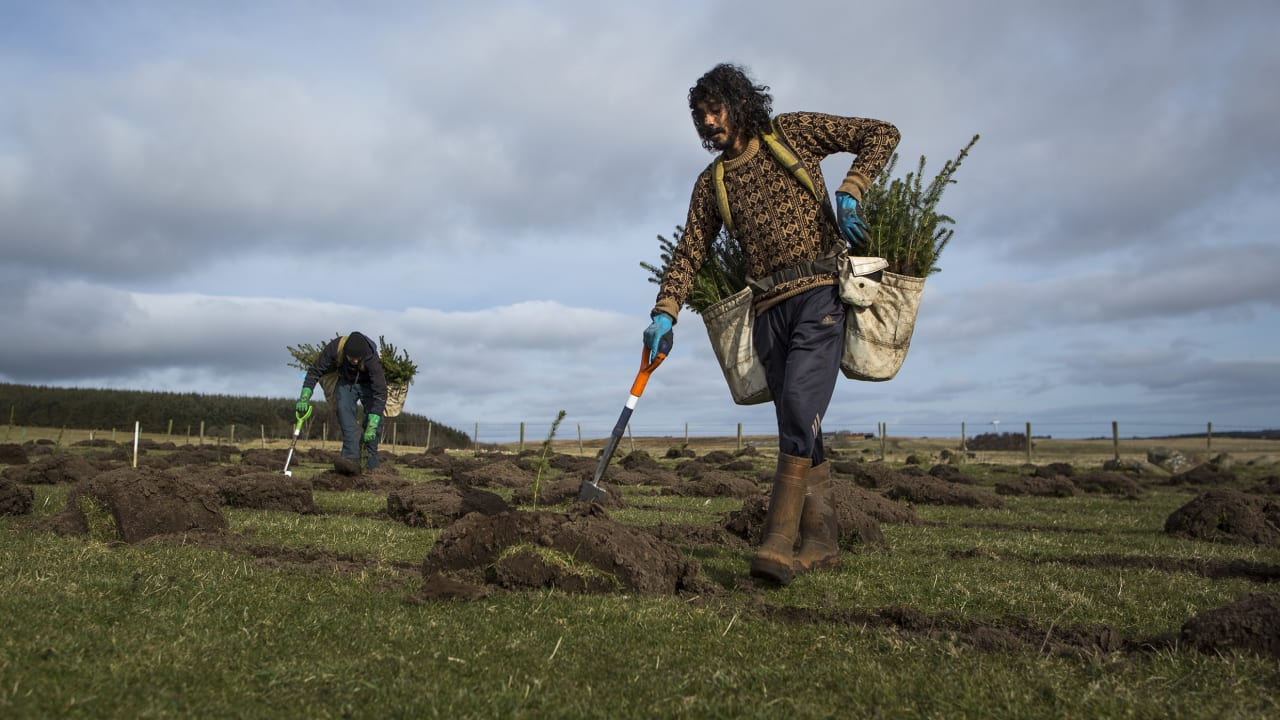 How we start planning for a global mission to replant trees