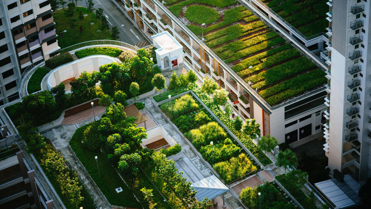 Green roofs can make cities healthier and happier. Why aren't they everywhere? thumbnail