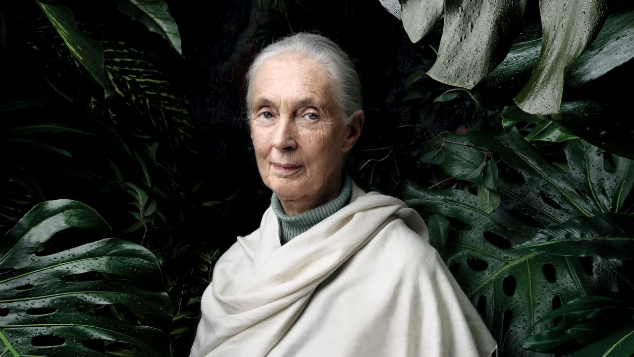 Jane Goodall would love to pet your dog, if that's okay