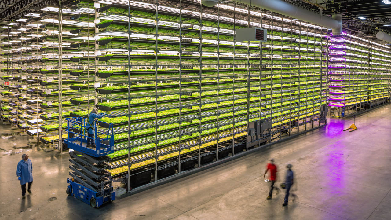 Abu Dhabi is investing $100 million in indoor farming as it tries to become more resilient
