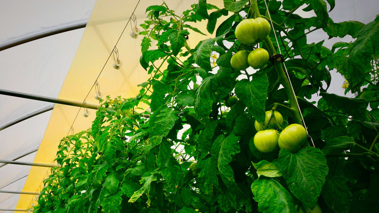 This 'quantum dot' tech helps grow more plants by making sunlight more powerful