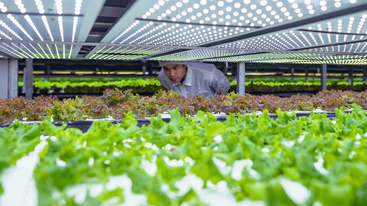 Why the World Wildlife Fund is trying to spark an indoor farming revolution