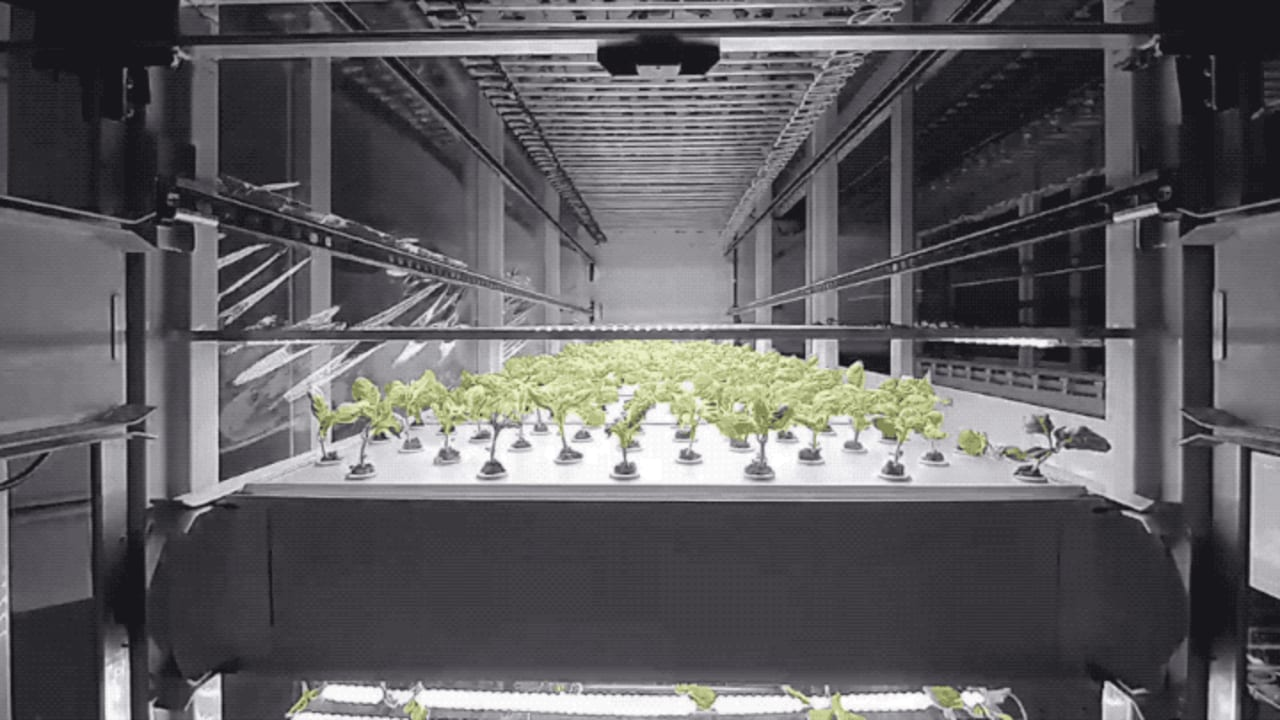 This vertical farm lets you subscribe to your own plot of indoor-grown greens