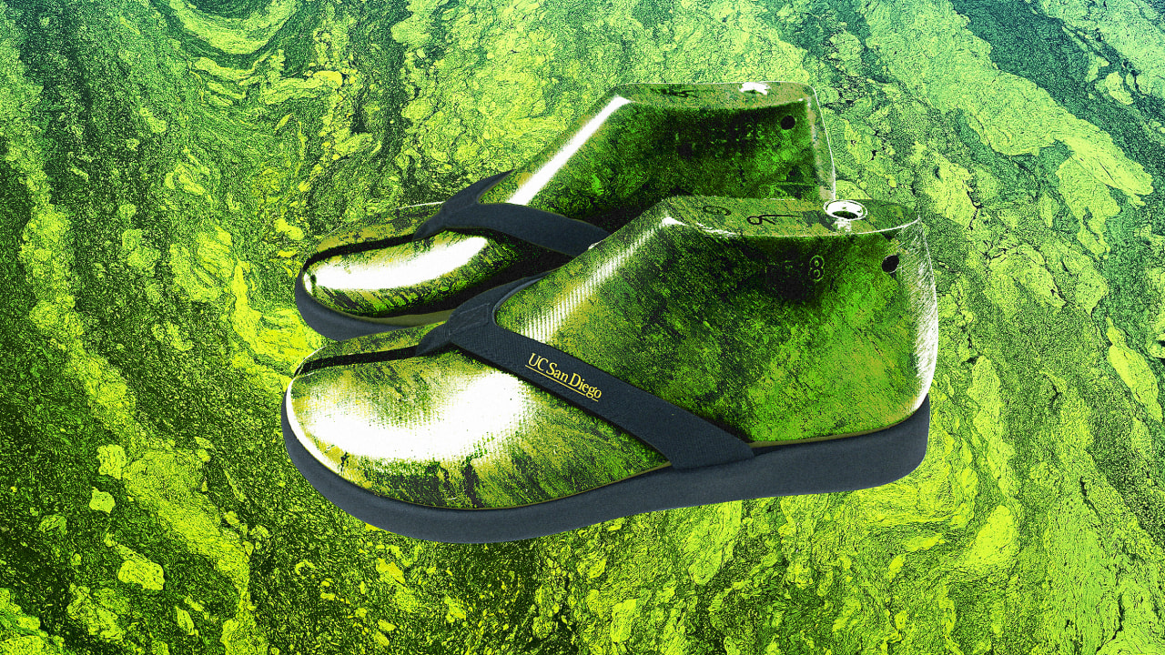 How one lab is turning algae into flip-flops—and taking on Big Plastic in the process