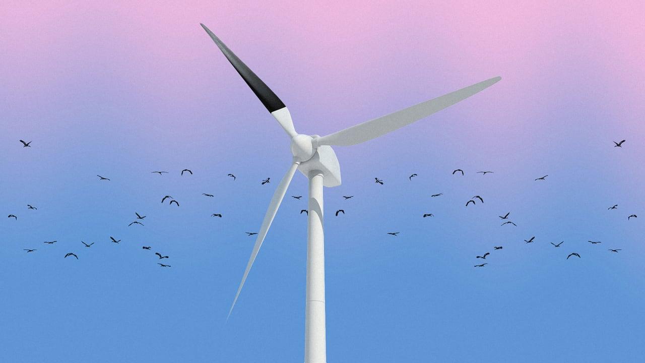 Painting Wind Turbine Blades Black Can Reduce Bird Deaths 70