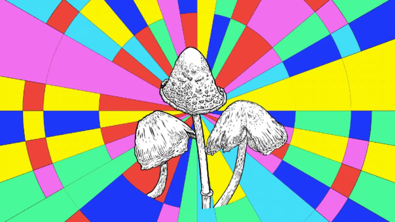 Forget marijuana. Mushrooms are on the ballot on November 3
