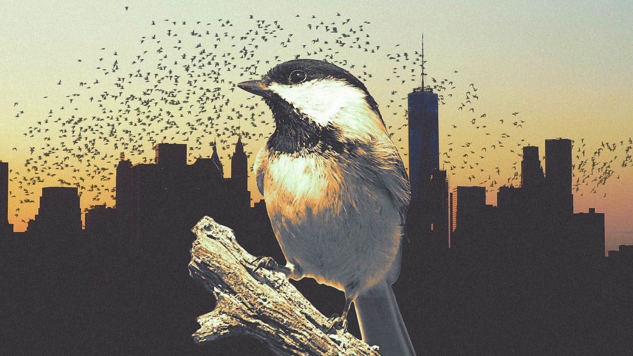 Why cities should be designed for birds