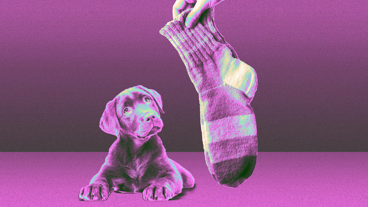 Give your socks back to Smartwool and they'll be turned into dog beds