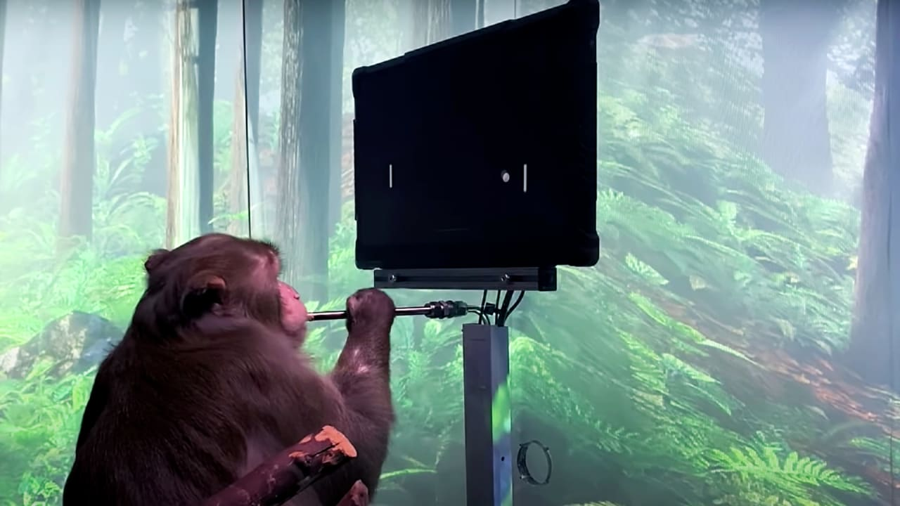 Elon Musk just shared a video of a monkey controlling Pong with his brain