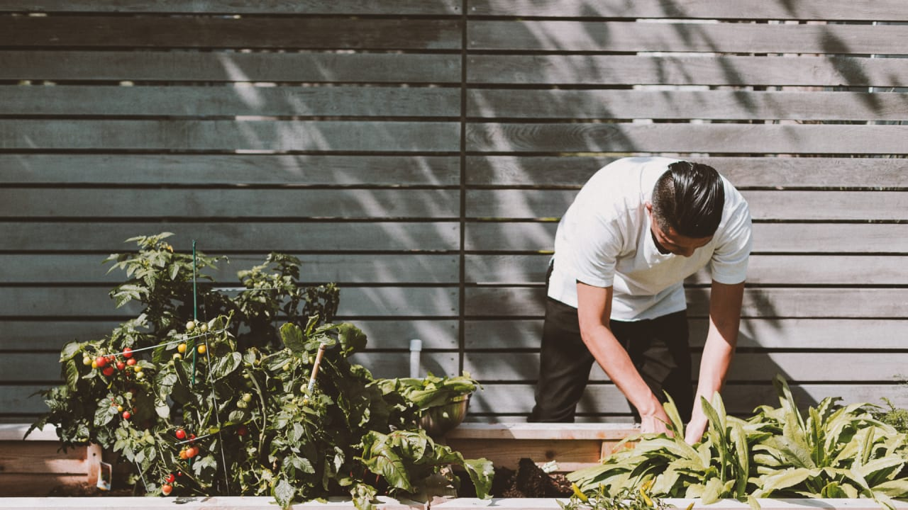 Gardening saves humanity yet again: Study reveals benefits of growing protein in your backyard