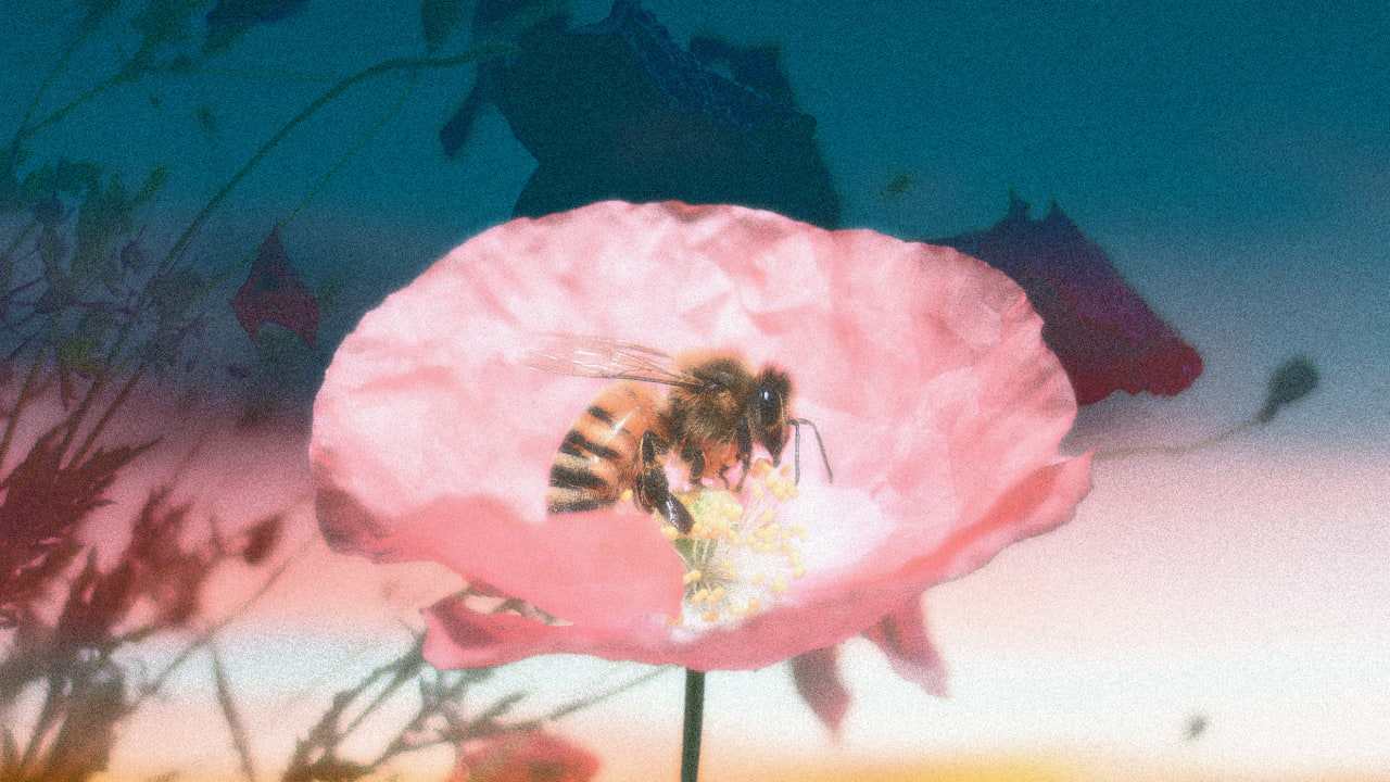 Bees have a new, lifesaving 'vaccine,' too