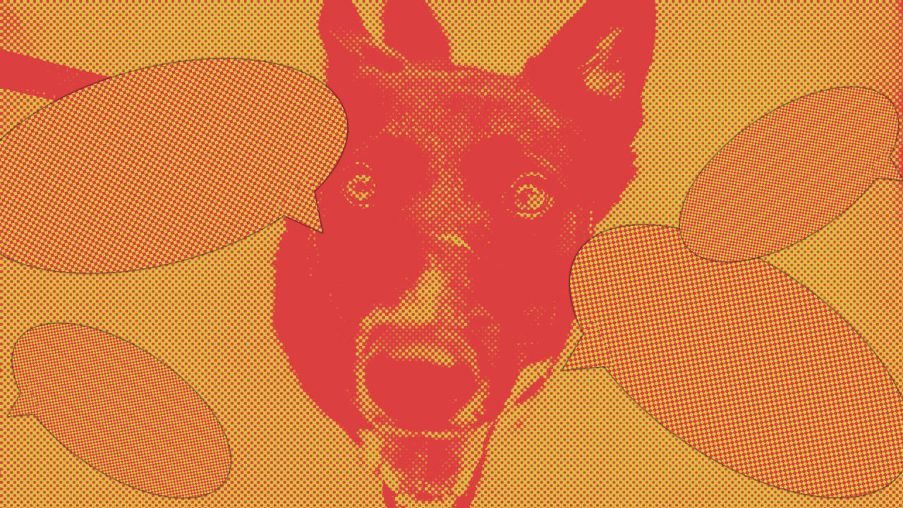 Talk to your dogs: Their brains process speech the same way yours does