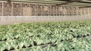 This Underground Urban Farm Also Heats The Building Above It