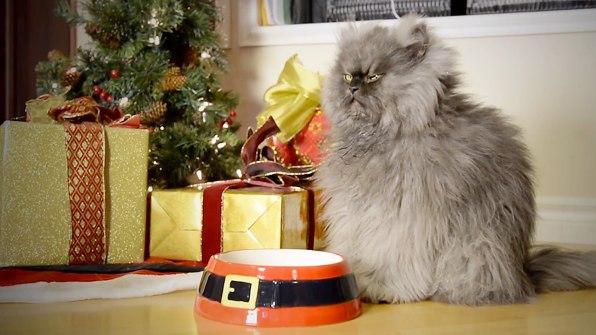 3023393-inline-i-2-grumpy-cat-says-its-h