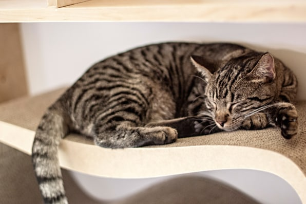 I Learned Quickly The First Of Weeks Need More Hiding Hole Places For Cats To Go And Chill Says Ericka Basile Founder
