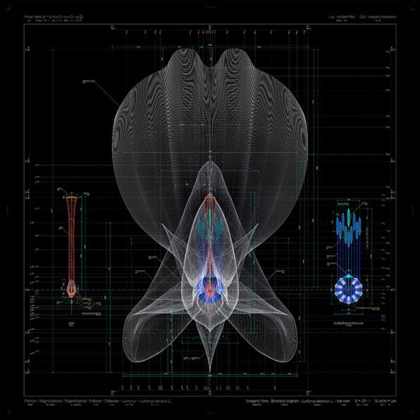 Fantastically Complex Blueprints Of Plants