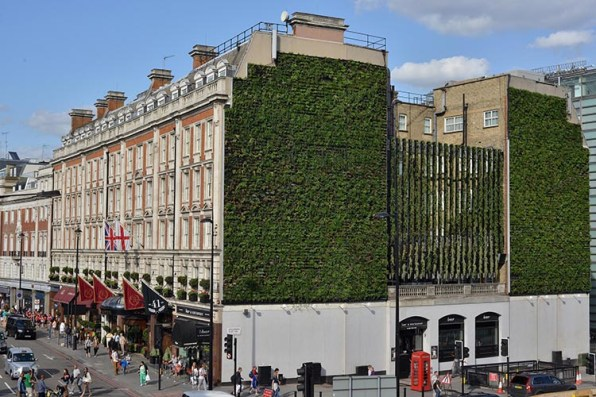 London's Largest Living Wall Takes Root