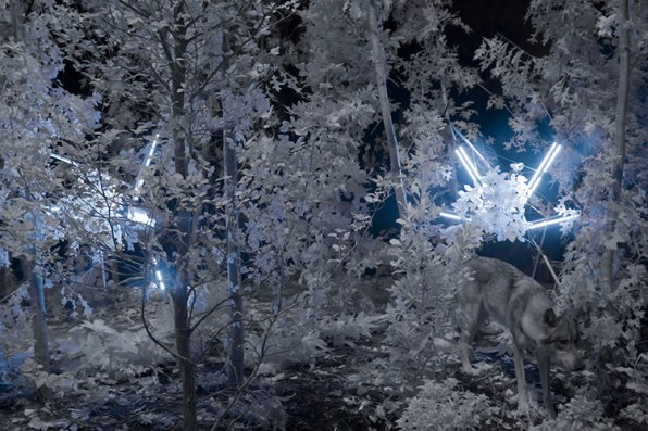 Artists Pay Tribute To The Endangered Gray Wolf, With Robot Arms And Hacked Blueberries