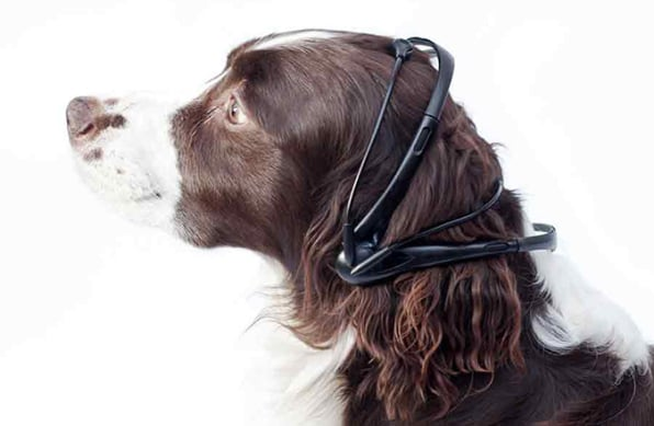 A Mind-Reading Dog Translator That Just Might Work