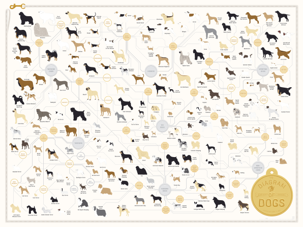 181 Breeds Of Dog On One Awesome Poster