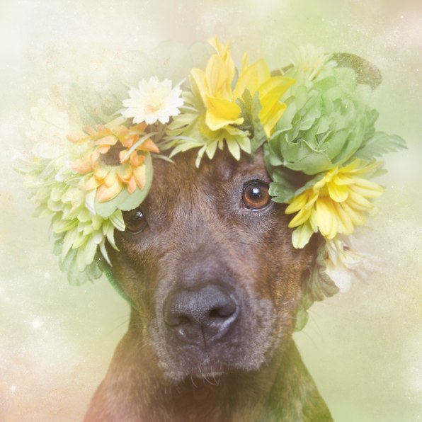 Pit Bulls Photographed As Lovely Fairy Tale Creatures