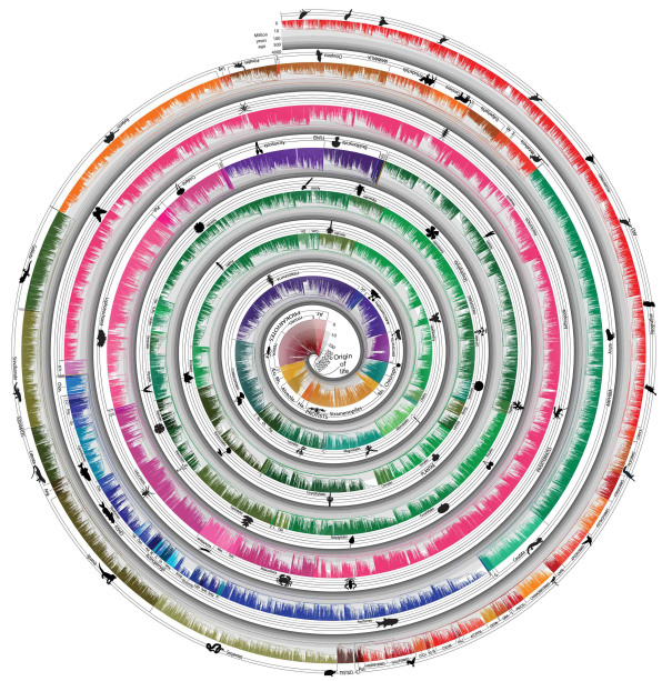 World's Largest Tree Of Life Visualizes 50,000 Species Over Time